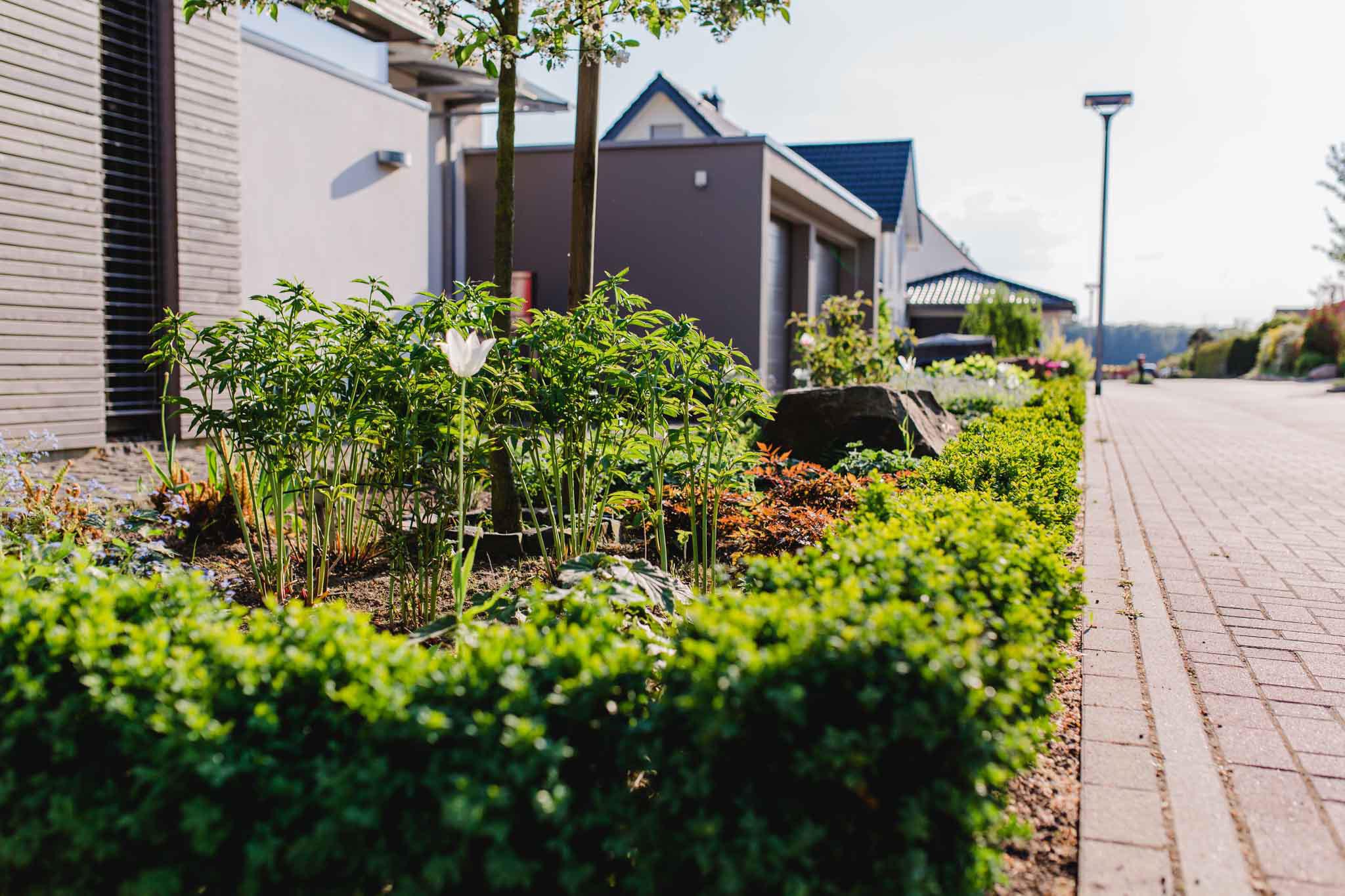 pflanzarbeiten in lage lemgo detmold gartenlandschaftsbau schr der. Black Bedroom Furniture Sets. Home Design Ideas